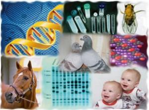 Factoring Genetics into Your Pigeon Breeding